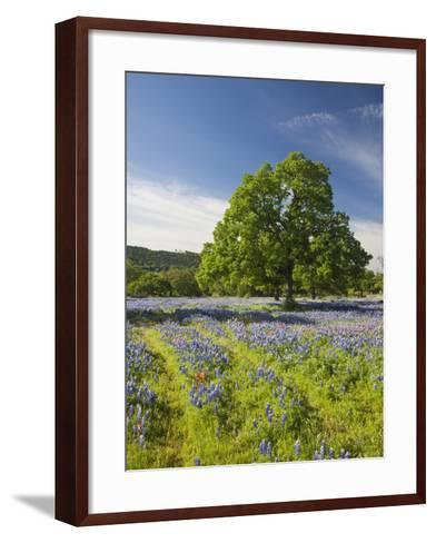 Lone Oak Standing in Field of Wildflowers with Tracks Leading by Tree, Texas Hill Country, Usa-Julie Eggers-Framed Art Print