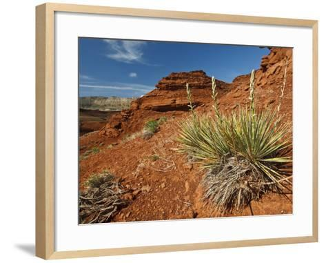 Yucca on Red Soil in Canyon Lands on Northern Wyoming, Usa-Larry Ditto-Framed Art Print