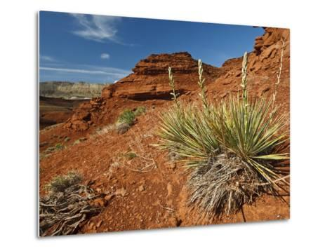 Yucca on Red Soil in Canyon Lands on Northern Wyoming, Usa-Larry Ditto-Metal Print