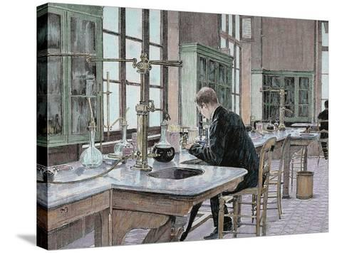 French Chemist and Bacteriologist. Study of Microbes in the Pasteur Institute-Prisma Archivo-Stretched Canvas Print