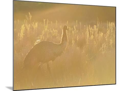 Emu, Wilsons Promontory National Park, Victoria, Australia, Pacific-Jochen Schlenker-Mounted Photographic Print