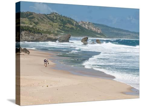 Mature Couple Walking on Bathsheba Beach, Barbados, Windward Islands, West Indies, Caribbean-Michael DeFreitas-Stretched Canvas Print