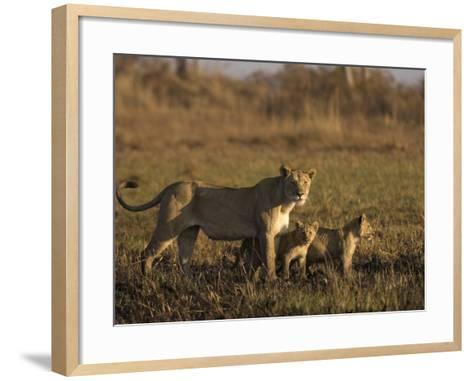 Lioness and Cubs, Busanga Plains, Kafue National Park, Zambia, Africa-Sergio Pitamitz-Framed Art Print
