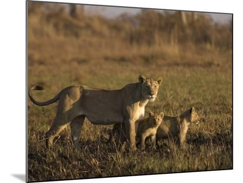Lioness and Cubs, Busanga Plains, Kafue National Park, Zambia, Africa-Sergio Pitamitz-Mounted Photographic Print