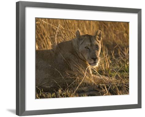 Lioness, Busanga Plains, Kafue National Park, Zambia, Africa-Sergio Pitamitz-Framed Art Print