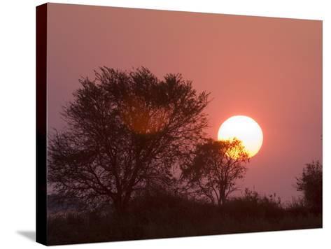 Sunrise, Busanga Plains, Kafue National Park, Zambia, Africa-Sergio Pitamitz-Stretched Canvas Print