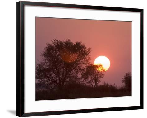 Sunrise, Busanga Plains, Kafue National Park, Zambia, Africa-Sergio Pitamitz-Framed Art Print