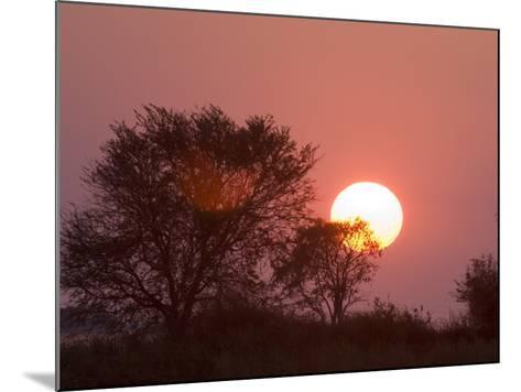 Sunrise, Busanga Plains, Kafue National Park, Zambia, Africa-Sergio Pitamitz-Mounted Photographic Print