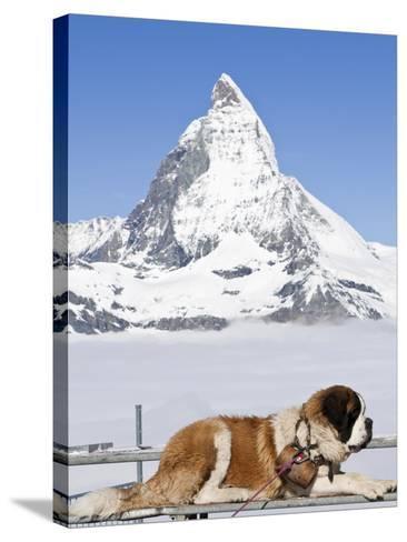 St. Bernard Dog and Matterhorn From Atop Gornergrat, Switzerland, Europe-Michael DeFreitas-Stretched Canvas Print
