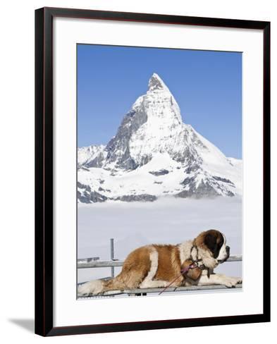 St. Bernard Dog and Matterhorn From Atop Gornergrat, Switzerland, Europe-Michael DeFreitas-Framed Art Print