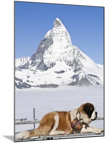 St. Bernard Dog and Matterhorn From Atop Gornergrat, Switzerland, Europe-Michael DeFreitas-Mounted Photographic Print