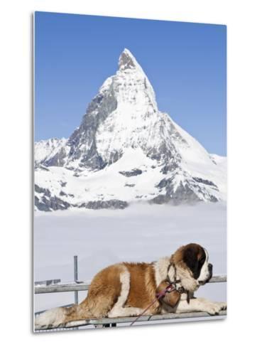 St. Bernard Dog and Matterhorn From Atop Gornergrat, Switzerland, Europe-Michael DeFreitas-Metal Print
