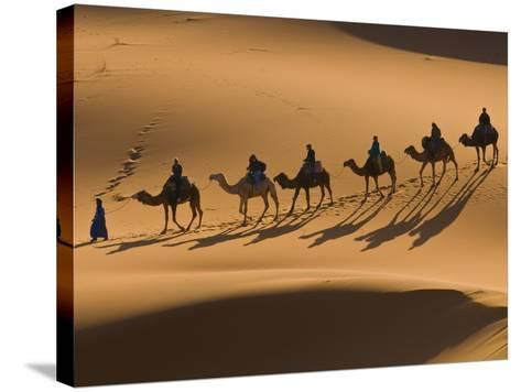 Camels in the Dunes, Merzouga, Morocco, North Africa, Africa-Michael Runkel-Stretched Canvas Print