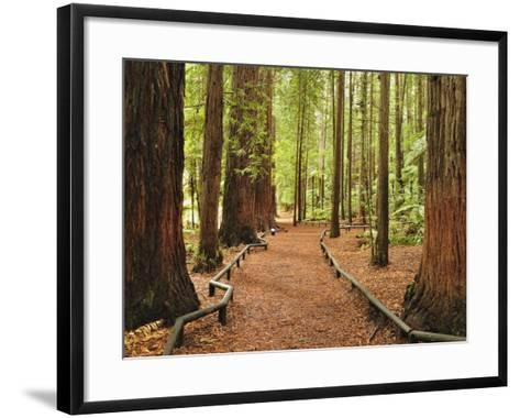 Walkway, the Redwoods, Rotorua, Bay of Plenty, North Island, New Zealand, Pacific-Jochen Schlenker-Framed Art Print