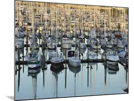 Westhaven, Waitemata Harbour, Auckland, North Island, New Zealand, Pacific-Jochen Schlenker-Mounted Photographic Print