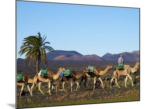 Excursion By Camel to Visit Volcano, National Park of Timanfaya, Lanzarote, Canary Islands, Spain--Mounted Photographic Print