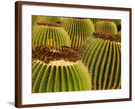 Cactus Garden of Guatiza, Lanzarote, Canary Islands, Spain, Europe--Framed Art Print