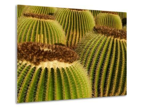 Cactus Garden of Guatiza, Lanzarote, Canary Islands, Spain, Europe--Metal Print