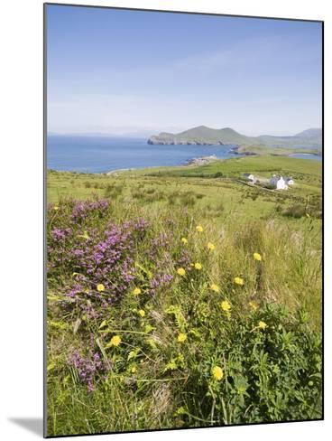 Valentia Island, Ring of Kerry, County Kerry, Munster, Republic of Ireland, Europe--Mounted Photographic Print