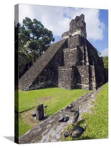Turkeys at a Pyramid in the Mayan Ruins of Tikal, UNESCO World Heritage Site, Guatemala-Christian Kober-Stretched Canvas Print
