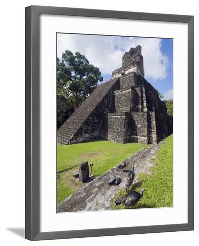 Turkeys at a Pyramid in the Mayan Ruins of Tikal, UNESCO World Heritage Site, Guatemala-Christian Kober-Framed Art Print