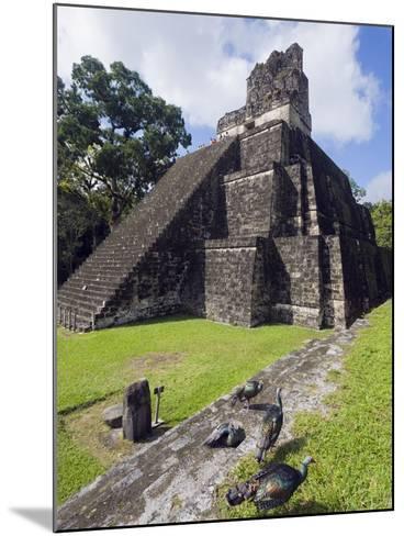 Turkeys at a Pyramid in the Mayan Ruins of Tikal, UNESCO World Heritage Site, Guatemala-Christian Kober-Mounted Photographic Print