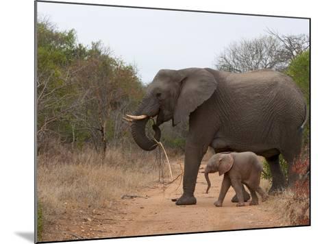 Elephant (Loxodonta Africana), Kapama Game Reserve, South Africa, Africa-Sergio Pitamitz-Mounted Photographic Print