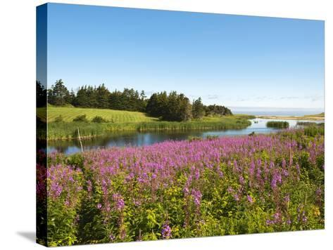 Field Near Lakeville, Prince Edward Island, Canada, North America-Michael DeFreitas-Stretched Canvas Print