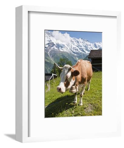Jungfrau Massif and Cow Near Murren, Jungfrau Region, Switzerland, Europe-Michael DeFreitas-Framed Art Print