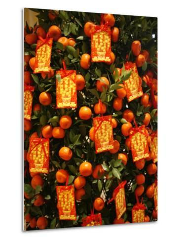 Tangerine Good Luck Symbols, Chinese New Year Decoration, Macao, China, Asia--Metal Print