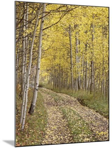 Lane Through Fall Aspens, Ophir Pass, Uncompahgre National Forest, Colorado, USA-James Hager-Mounted Photographic Print