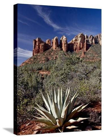 Red Rock Formations and An Agave Plant, Coconino National Forest, Arizona-James Hager-Stretched Canvas Print
