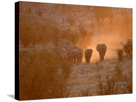 Elephants, Hwange National Park, Zimbabwe, Africa--Stretched Canvas Print