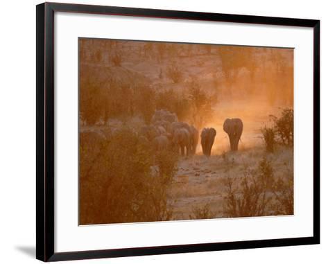 Elephants, Hwange National Park, Zimbabwe, Africa--Framed Art Print