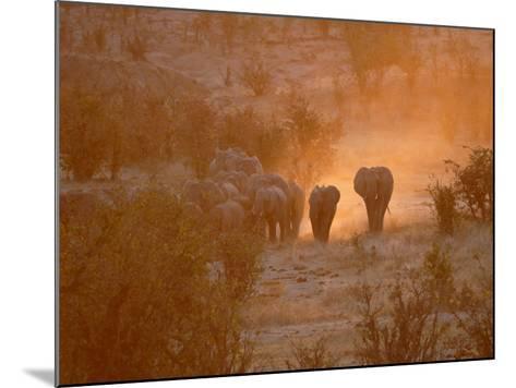 Elephants, Hwange National Park, Zimbabwe, Africa--Mounted Photographic Print