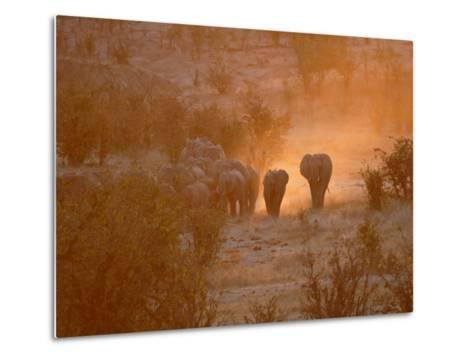 Elephants, Hwange National Park, Zimbabwe, Africa--Metal Print