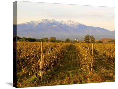 Vineyards and Canigou Mountain, Languedoc Roussillon, France, Europe--Stretched Canvas Print