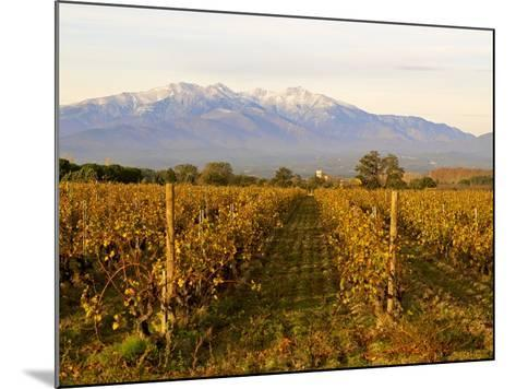 Vineyards and Canigou Mountain, Languedoc Roussillon, France, Europe--Mounted Photographic Print