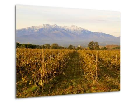 Vineyards and Canigou Mountain, Languedoc Roussillon, France, Europe--Metal Print