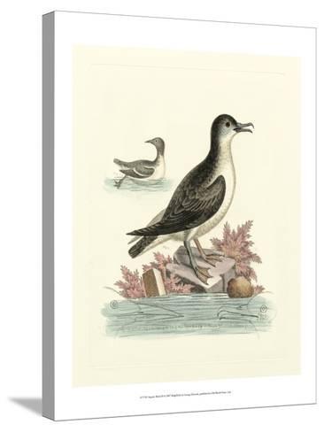 Aquatic Birds III-George Edwards-Stretched Canvas Print