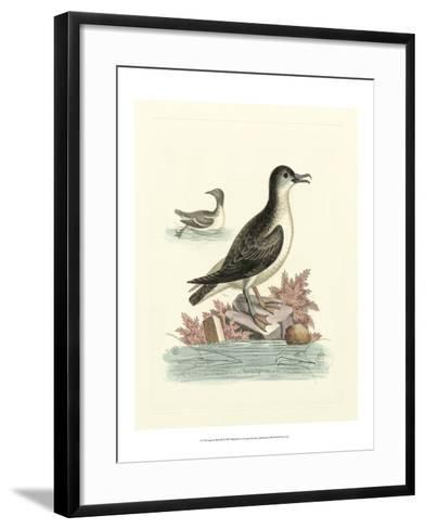 Aquatic Birds III-George Edwards-Framed Art Print