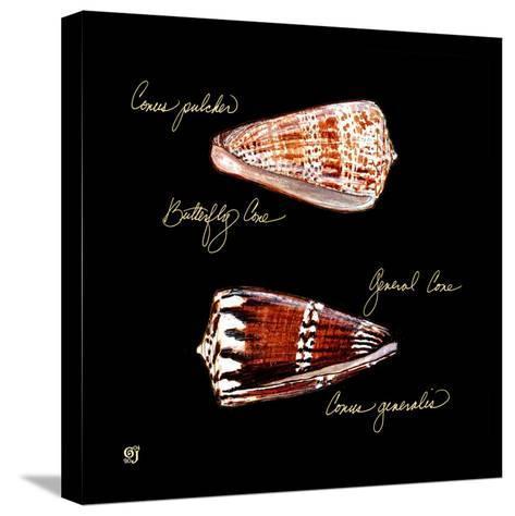 Striking Shells III-Ginny Joyner-Stretched Canvas Print