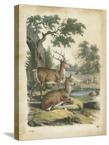 Nature's Gathering IV-John Wiek-Stretched Canvas Print