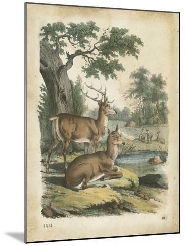 Nature's Gathering IV-John Wiek-Mounted Art Print