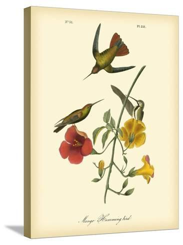 Mango Hummingbird-John James Audubon-Stretched Canvas Print
