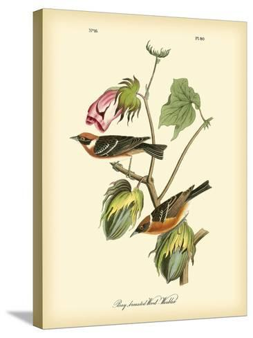 Bay Breasted Wood-Warbler-John James Audubon-Stretched Canvas Print