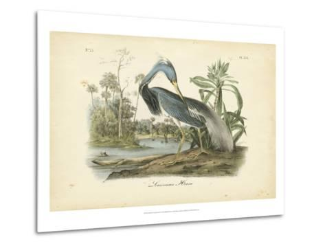 Audubon's Louisiana Heron-John James Audubon-Metal Print