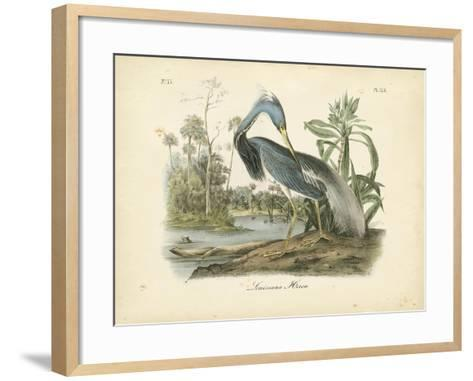 Audubon's Louisiana Heron-John James Audubon-Framed Art Print