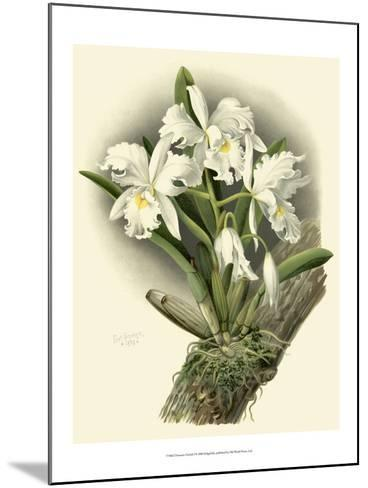 Dramatic Orchid I-Chas Storer-Mounted Art Print