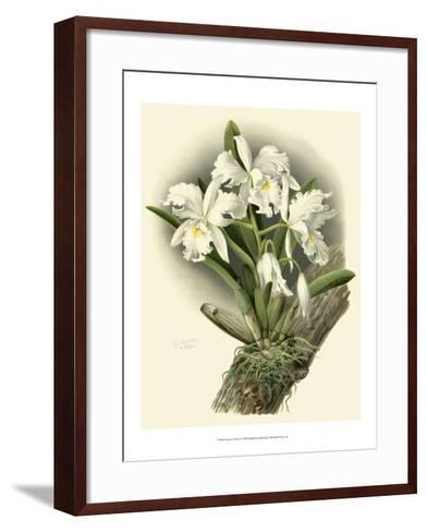 Dramatic Orchid I-Chas Storer-Framed Art Print